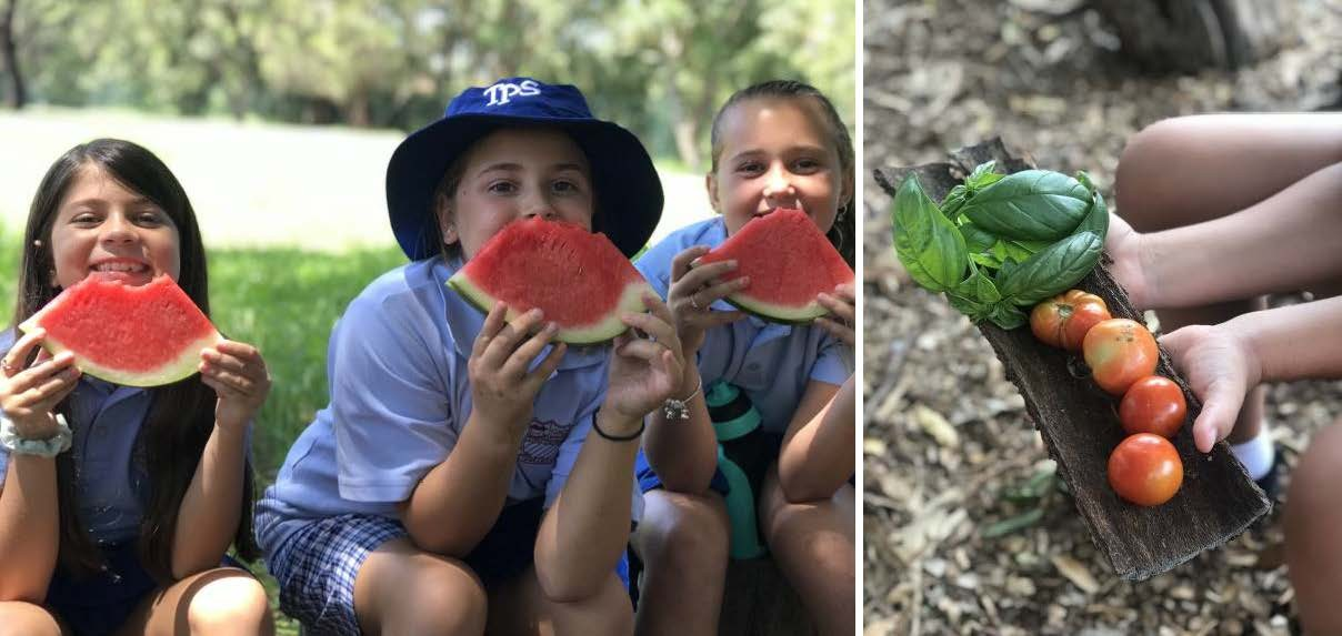 Photos of school students eating watermelon and basil with tomatoes